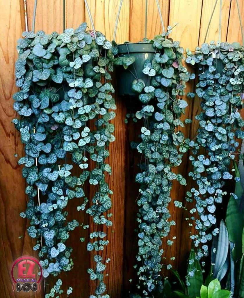 سروپژیا نکته های زمستانی برای نگهداری از گل های آپارتمانی