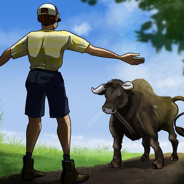 گاو وحشی زنده ماندن در موقعیت های خطرناک