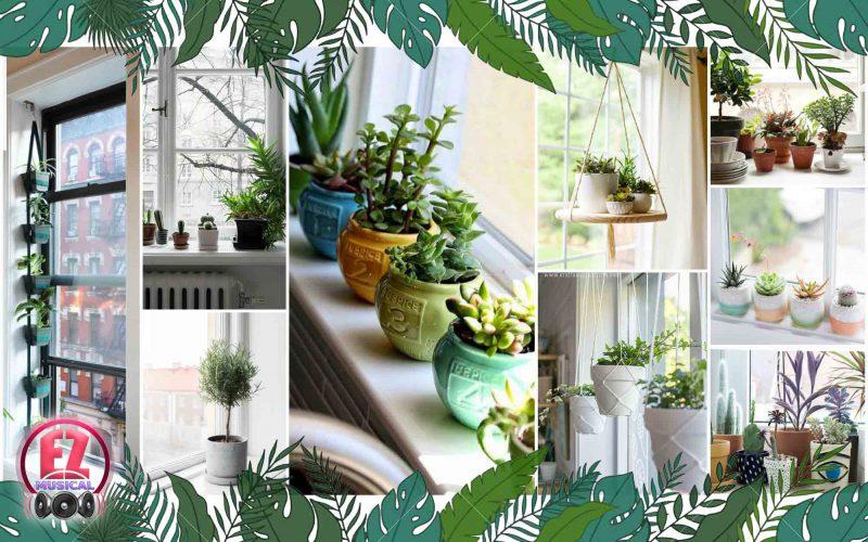 نکته های زمستانی برای نگهداری از گل های آپارتمانی
