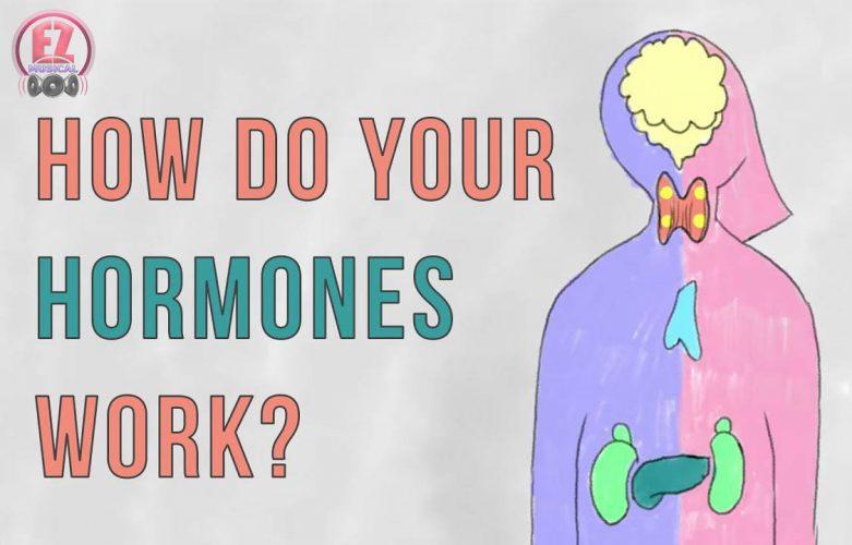 چگونگی تاثیر هورمونها بر عواطف و احساسات